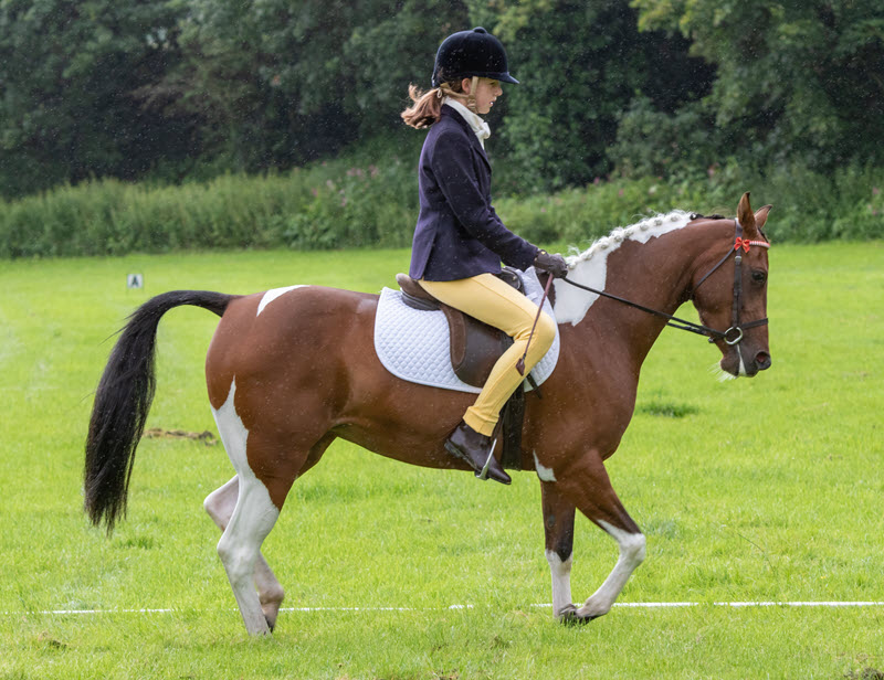 Unaffiliated Dressage – 26th September